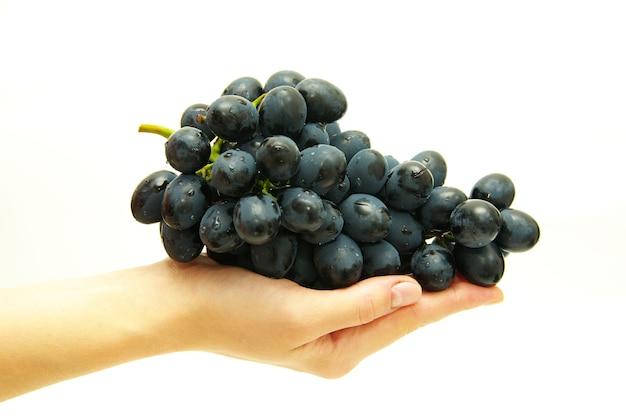 Cacho de uvas na mão feminina