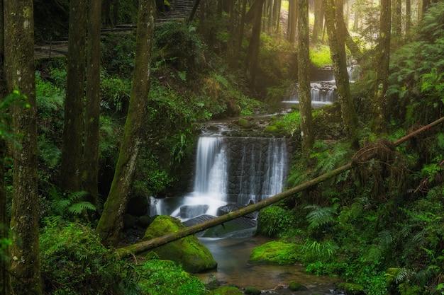 Cachoeira com um caminho verde na área cênica nacional de alishan
