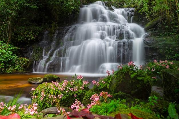 Cachoeira de mun dang com um primeiro plano de flor rosa na floresta tropical