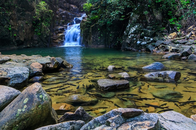 Cachoeira de pliw, waterwall bonito no nationalpark da província de chunthaburi, thailand.