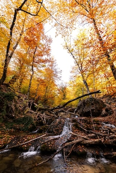 Cachoeira e rio de montanha na floresta de outono