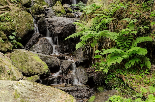 Cachoeira em um rio de montanha na floresta