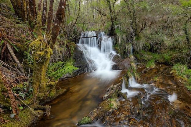 Cachoeira em uma bela floresta na região da galiza, espanha.