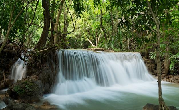 Cachoeira, fundo da floresta, paisagem