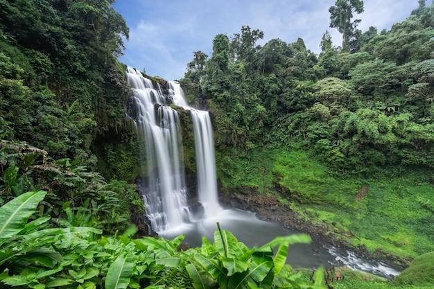 Cachoeira, fundo natural calmo com bela cachoeira na selva floresta húmida