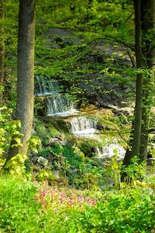 Cachoeira nas rochas em torno da qual crescem árvores com folhas verdes e grama