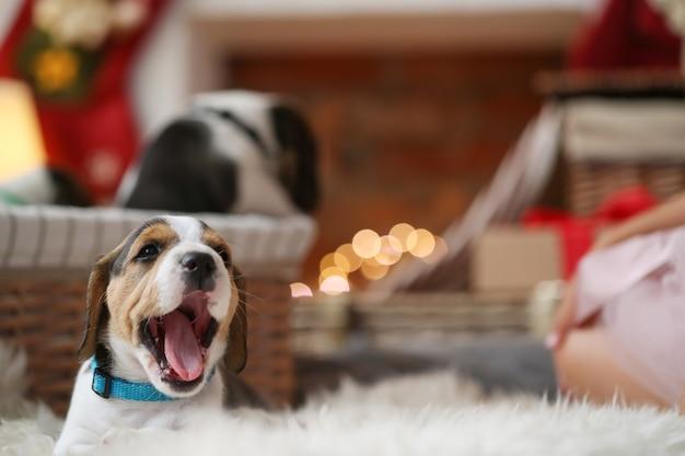 Cachorrinho bocejando