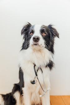Cachorrinho border collie com estetoscópio na parede branca interna
