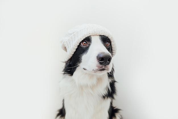 Cachorrinho border collie vestindo roupas quentes de malha, chapéu branco isolado no fundo branco