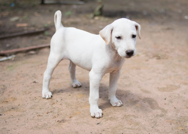 Cachorrinho branco feliz