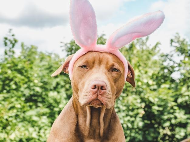 Cachorrinho de orelhas de coelho