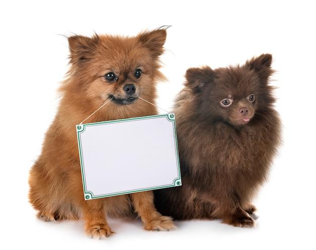 Cachorrinho e placa