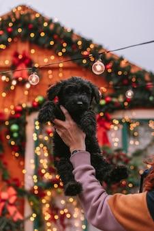 Cachorrinho em decorações de natal