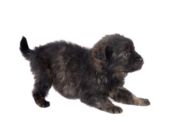 Cachorrinho fofo cachorro marrom no fundo branco