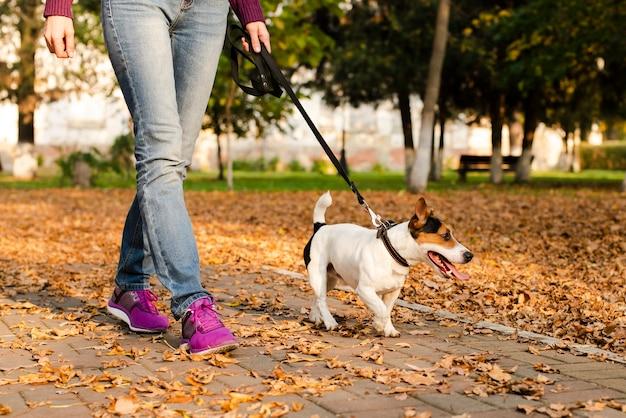 Cachorrinho fofo close-up caminhando ao ar livre