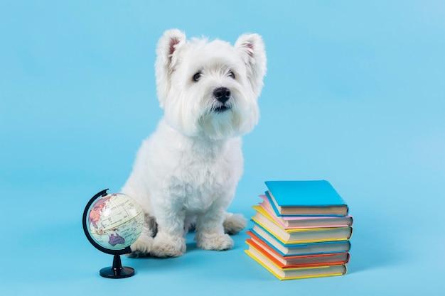Cachorrinho fofo de volta à escola