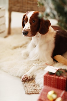 Cachorrinho fofo em uma sala de estar decorada de natal