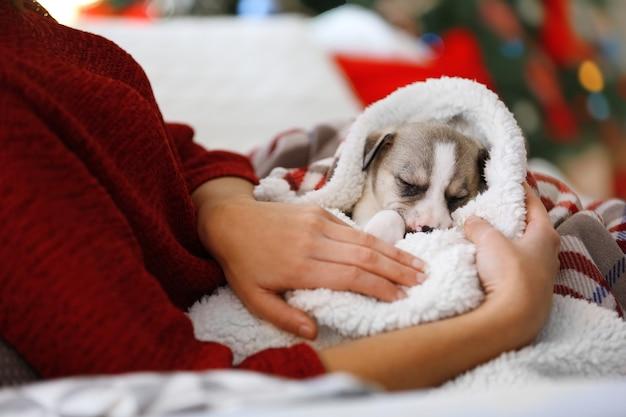 Cachorrinho fofo nas mãos de uma jovem no fundo do natal