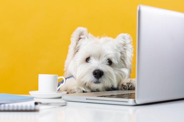 Cachorrinho fofo se passando por um empresário
