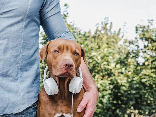 Cachorrinho marrom fofo com fones de ouvido