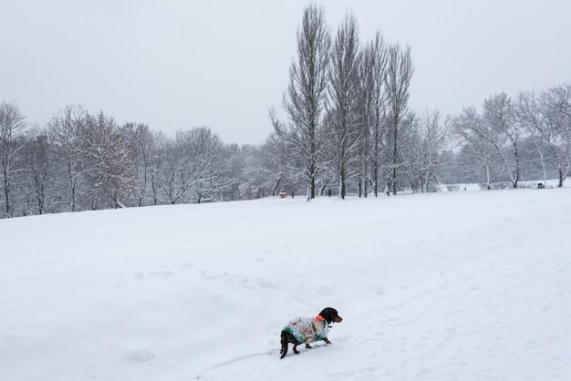 Cachorrinho na neve. cão de inverno.