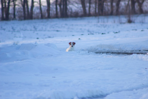 Cachorrinho na neve