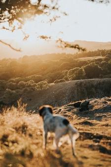 Cachorrinho passeando ao ar livre em um campo