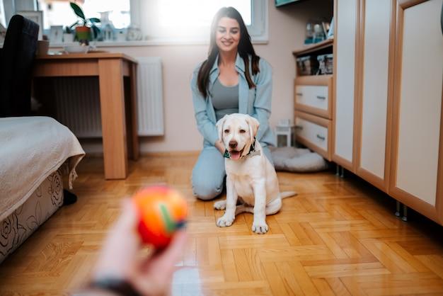 Cachorrinho pequeno bonito que olha o brinquedo da bola.