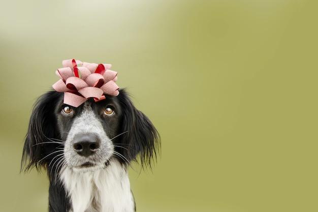 Cachorrinho presente aniversário coberto com uma fita vermelha. isolado em fundo verde