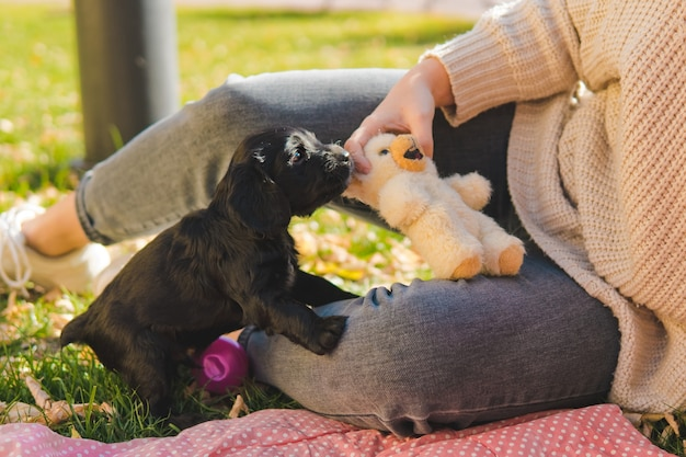 Cachorrinho preto brincando com um brinquedo
