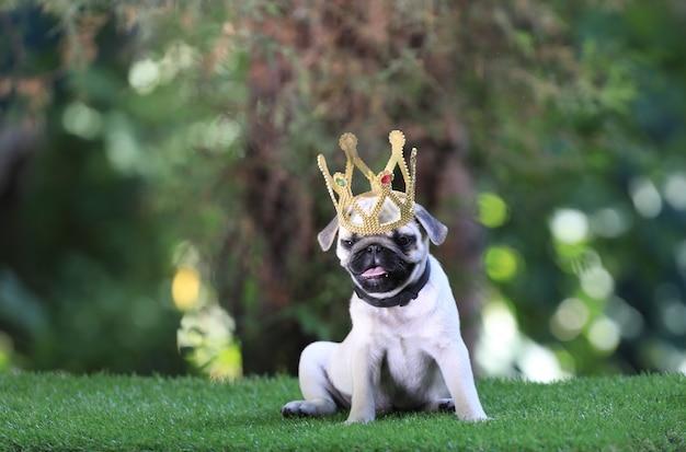 Cachorrinho pug com uma coroa no gramado