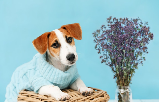 Cachorrinho que senta-se no assoalho de madeira no retrato azul da parede.