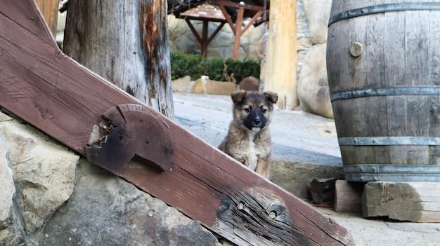 Cachorrinho sem-teto na escada perto da casa na aldeia. um cachorrinho engraçado guarda a casa.