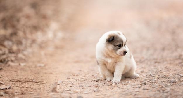 Cachorrinho sentado sozinho na estrada do solo