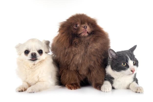 Cachorrinhos e gato isolados no branco