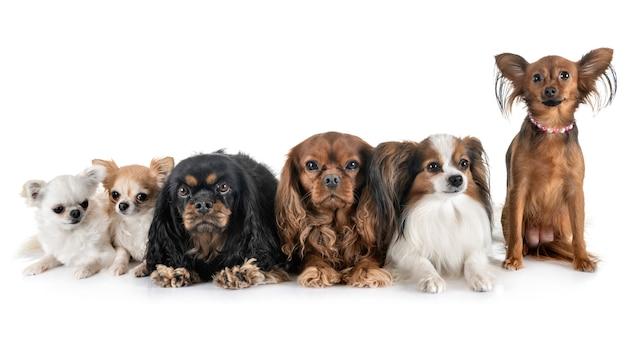 Cachorrinhos em estúdio