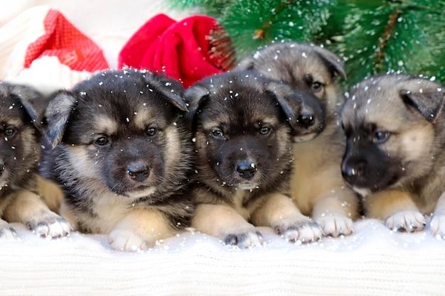 Cachorrinhos em um fundo de ano novo