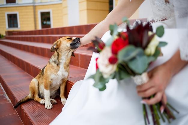 Cachorrinhos engraçados no dia do casamento