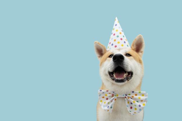 Cachorro akita feliz comemorando aniversário ou carnaval usando chapéu de festa e gravata borboleta