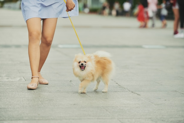 Cachorro andando na cidade