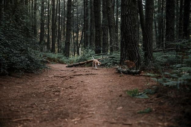 Cachorro andando na estrada de terra na floresta