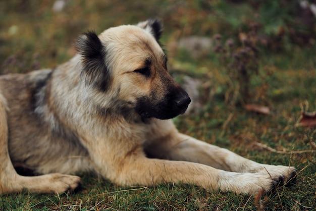 Cachorro ao ar livre no campo, caminhada, viagem, amizade