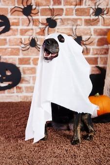 Cachorro assustador fantasiado de fantasma