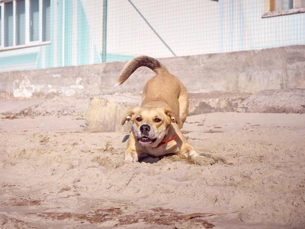 Cachorro ativo brincando na praia