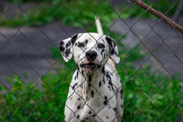 Cachorro atrás da cerca na gaiola.