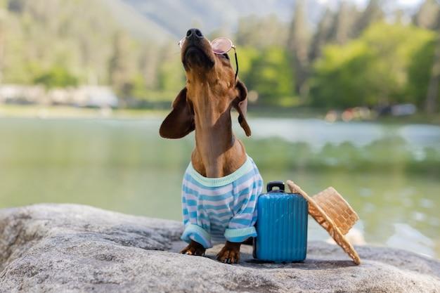 Cachorro bassê fofo sentado perto da água com uma mala nas férias com animais de estimação