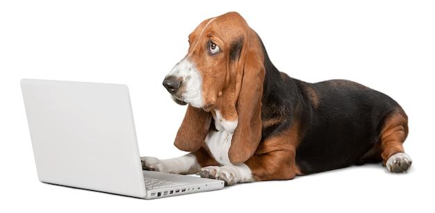 Cachorro basset hound com laptop no fundo