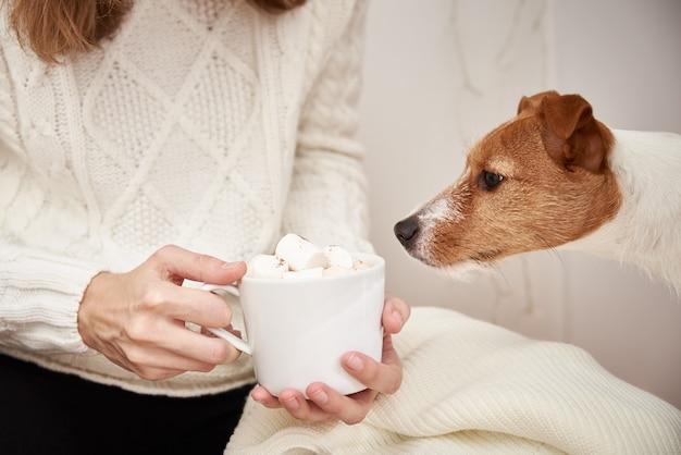 Cachorro bebe da xícara de café com marshmallow nas mãos de uma mulher