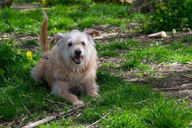 Cachorro bege obediente esperando ansiosamente por seu dono no interior de malta.