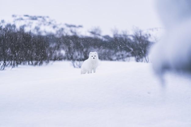 Cachorro branco coberto de neve em solo coberto de neve durante o dia